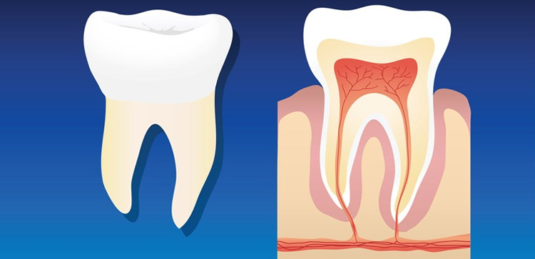 Root Canal Specification